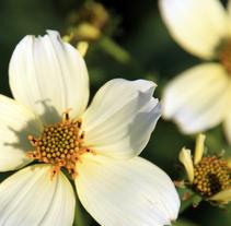 Flores. Un proyecto de Fotografía de Joaquín Martí - Miércoles, 15 de julio de 2009 20:42:35 +0200