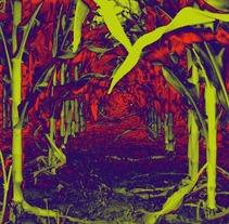 Naturaleza. Um projeto de Ilustração e Fotografia de Julieta Klimt         - 17.08.2012