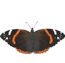 Mariposas. Un proyecto de Ilustración de ivan chacon         - 27.11.2014