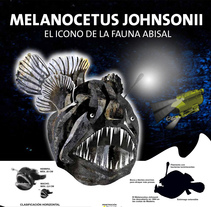 Melanocetus. A Information Design project by Guillermo Gomez Espinosa         - 21.11.2015