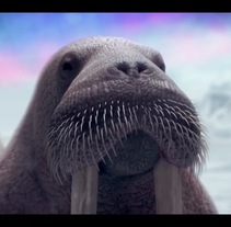 Bud Ligth Ritas - 3D Animation (sea lions & walruses). A 3D, and Animation project by David Escribano Albéniz         - 13.09.2016